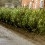 Planting Trees -Lincolnshire Landscaping
